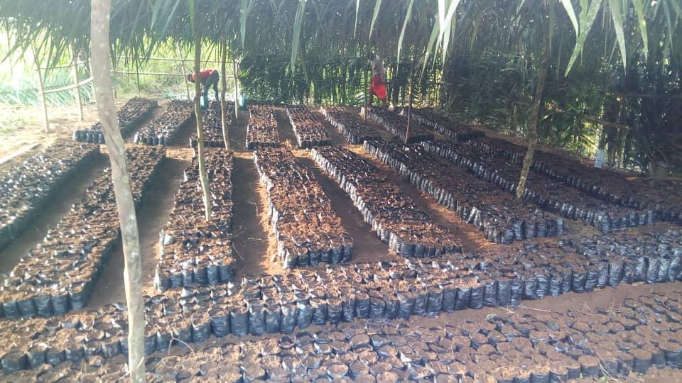 Création d'une exploitation communautaire d'agroforesterie à Nanga